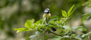PAPA-Mobil: Vogelsafari im Treptower Park